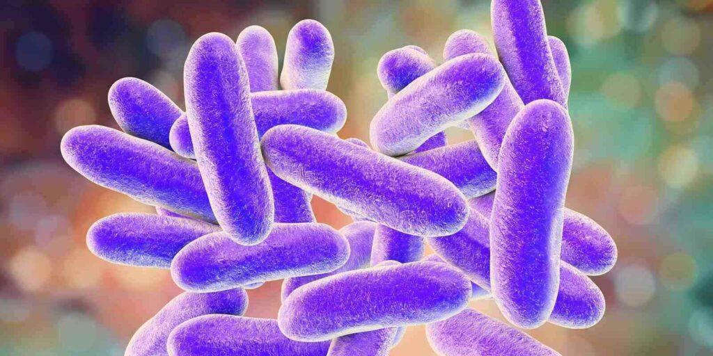 legionella bacteria 3d illustration
