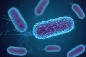 legionella bacteria 3d representation